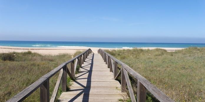 cadiz playa mar orejas de punta